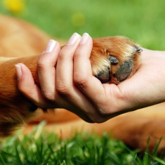 dog-paw-hand-pet-love.jpg